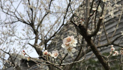 SUIの庭から春みっけ。
