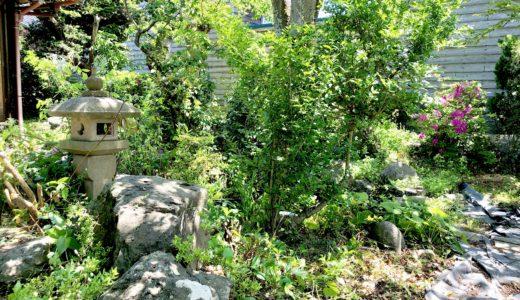 ある日のSUIの庭