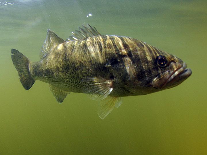 野池の釣り