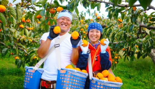 佐渡の名産おけさ柿。Iターン農家さんが品評会で表彰されました!