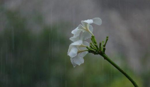 佐渡の梅雨、今年は?