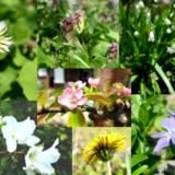 SUIの庭の花々たち