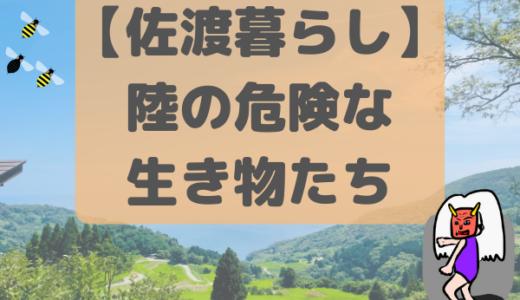 【佐渡暮らし】陸の危険な生き物たち
